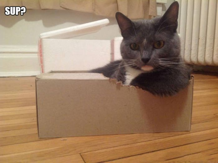 There's Just Something About Boxes That Cats Seem To Love