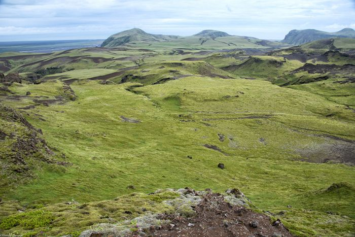 Moss in Iceland Is Unlike Any Other Moss In The World