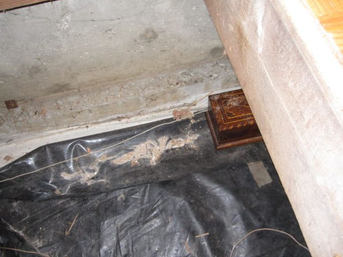 They Found A Trapdoor In Their House And Inside Was Something Incredible