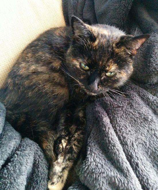 Note On Cat's Collar Reveals A Secret Life