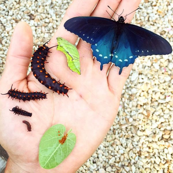 How One Man Repopulated A Rare Butterfly Species In His Backyard