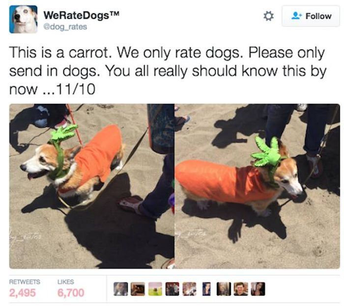 We Rate Dogs Is A Twitter Account That Will Keep Dog Lovers Laughing