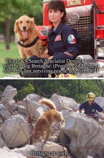 A Tribute To Bretagne, The Last 9/11 Rescue Dog