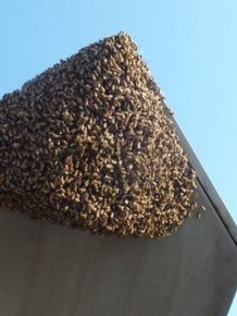 Honey Bees Try To Takeover A F-22 Raptor