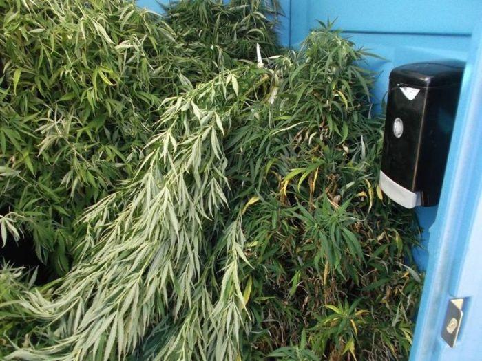 Police Find Porta Potty Packed With Marijuana Plants