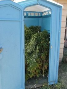 Police Find Porta Potty Packed With Marijuana Plants
