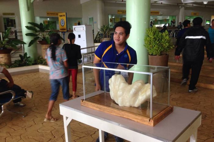 Fisherman Hides Massive 34kg Pearl For Ten Years