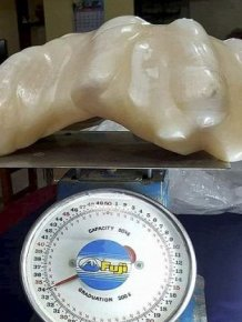 Fisherman Hides Massive 34kg Pearl For Ten Years
