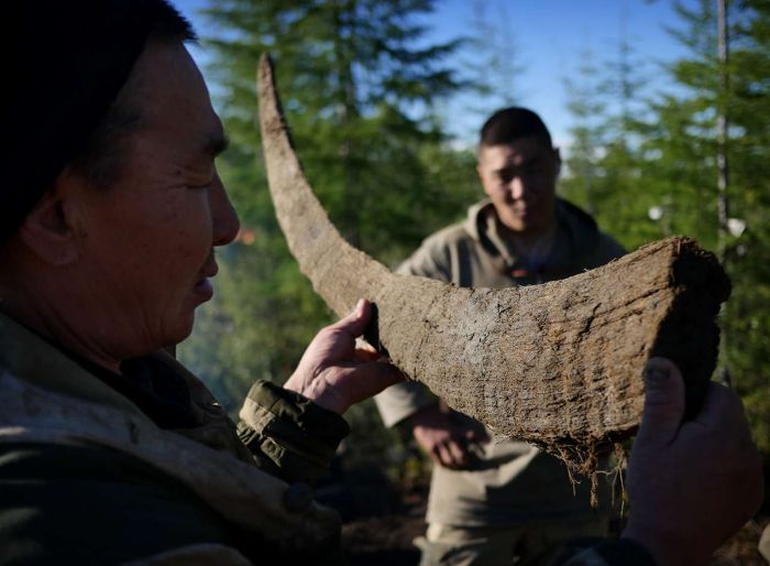Hunters In Russia Make Millions Selling Prehistoric Remains On The Black Market