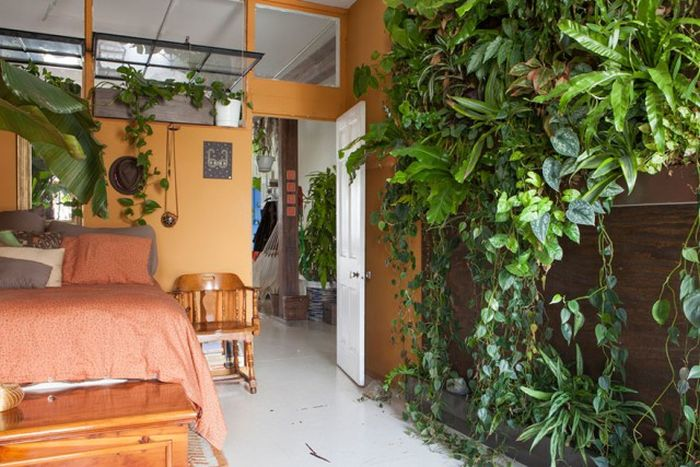 Girl Stashes More Than 500 Plants In Her Apartment