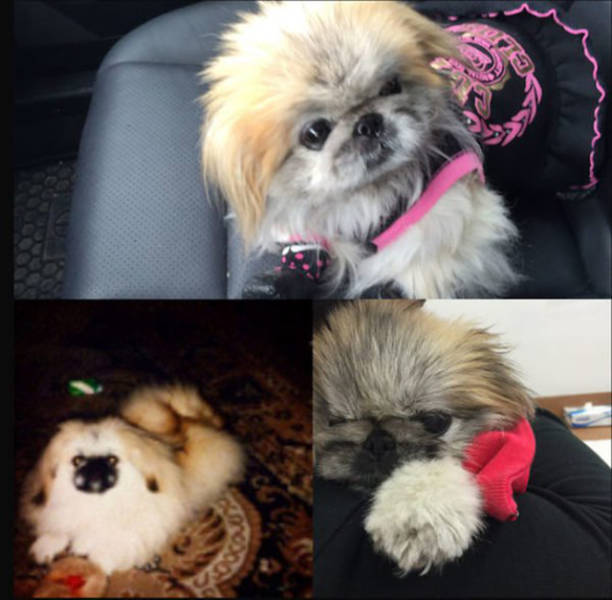 First And Last Pictures Of Pets That Will Tug At Your Heart Strings