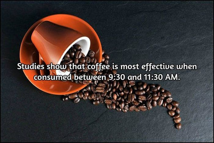 Interesting Facts About Coffee, The World's Most Important Drink