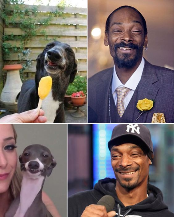 Celebrities Get Compared To Their Dog Look-Alikes