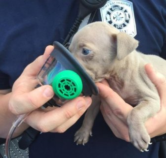 Firefighters Resuscitate Adorable Puppy Found In House Fire
