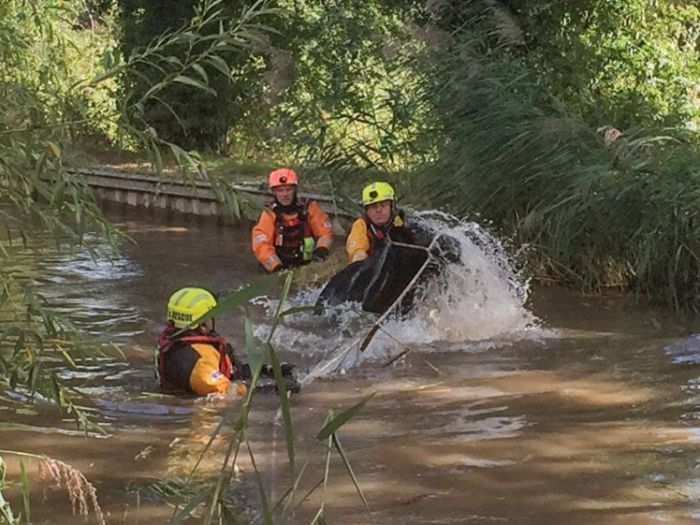 Cow Gets Rescued After An Adventure In The River
