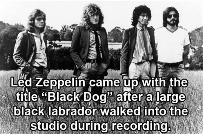 Fun Facts About Rock Stars And Rock Bands
