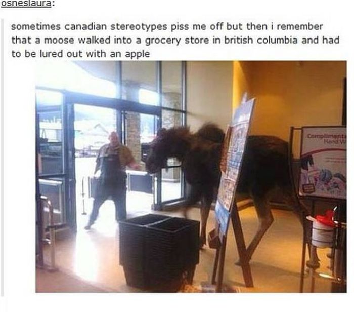 Crazy Things That Can Only Happen In Canada