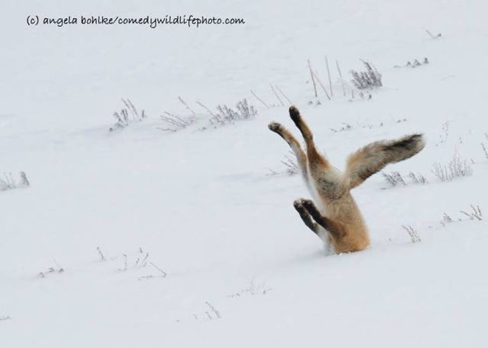 All The Best Entries From The Comedy Wildlife Photography Awards 2016, part 2016