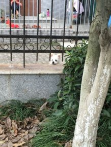 Dog Finds Itself In An Awkward Situation