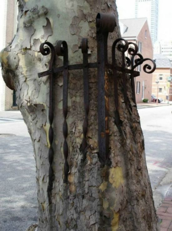 Stubborn Trees That Have Grown Through Objects