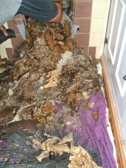 Having A Beehive In Your Chimney Is A Very Bad Time