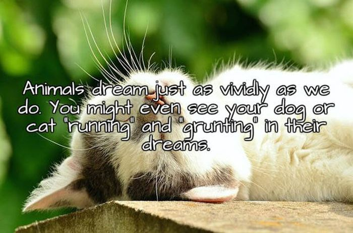 Interesting Facts About Sleep And Dreams That You Need To Know