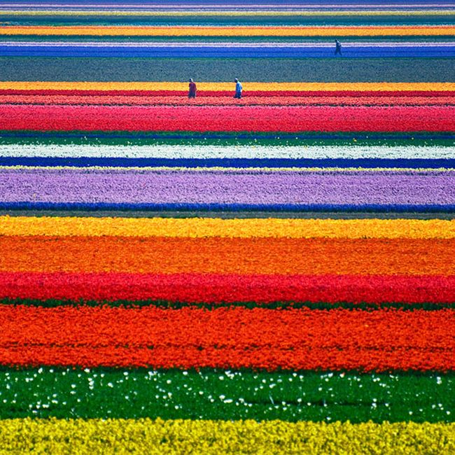 Picture Perfect Photos That Will Satisfy Every Perfectionist's Soul