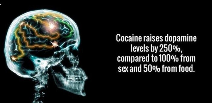 Fun Facts That Will Boost The Power Of Your Brain