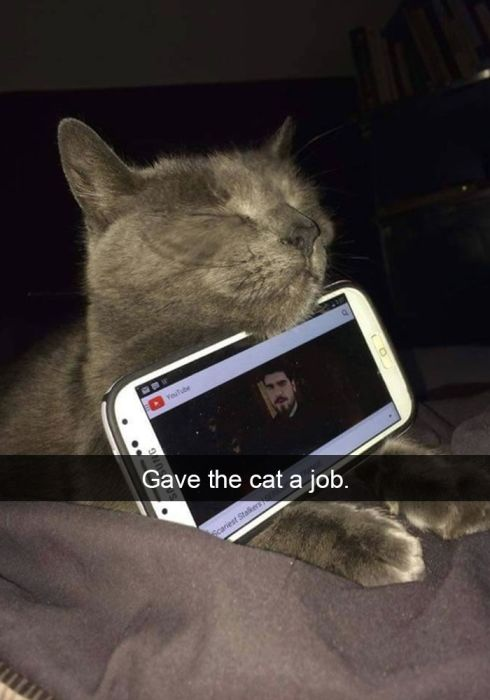 Hilarious Cat Snapchats That You Need In Your Life Right Meow