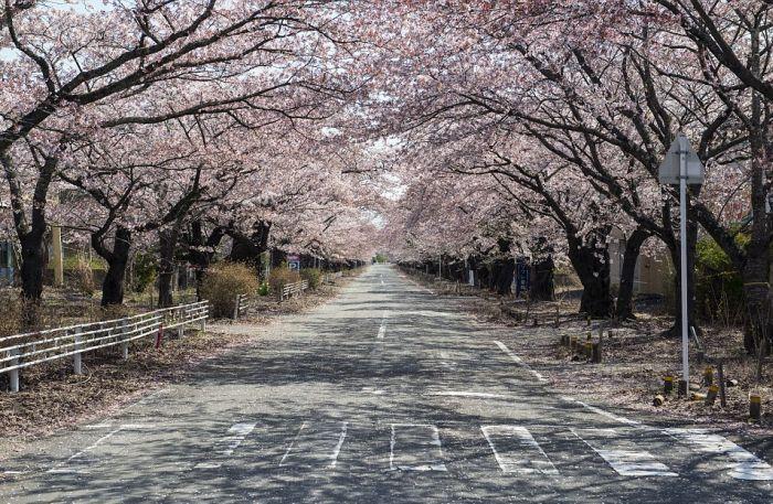 A Rare Glimpse Inside The Abandoned City Of Fukushima