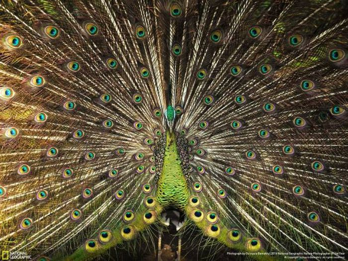 Stunning Pics From National Geographic's Nature Photographer Of The Year Contest