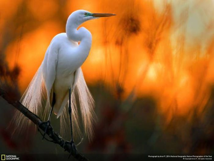 stunning pics from national geographics nature
