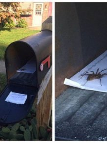A Large Serving Of Nope With An Extra Side Of Nope