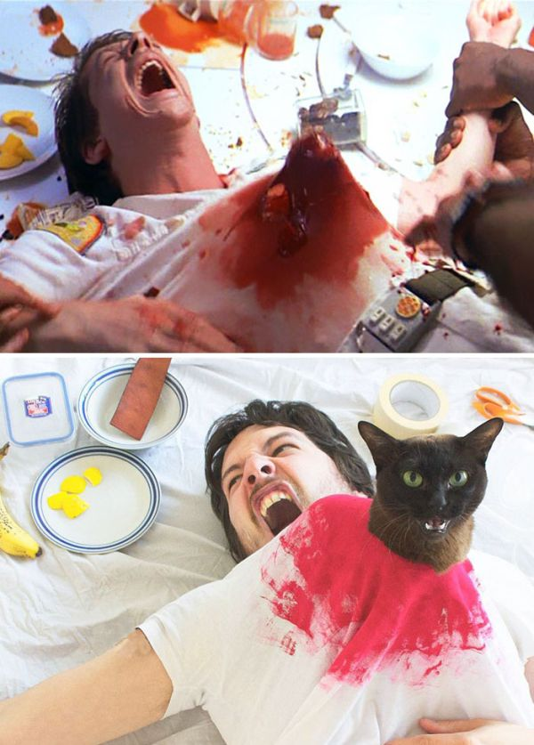 Guy Uses His Cats To Hilariously Recreate Scenes From Iconic Movies