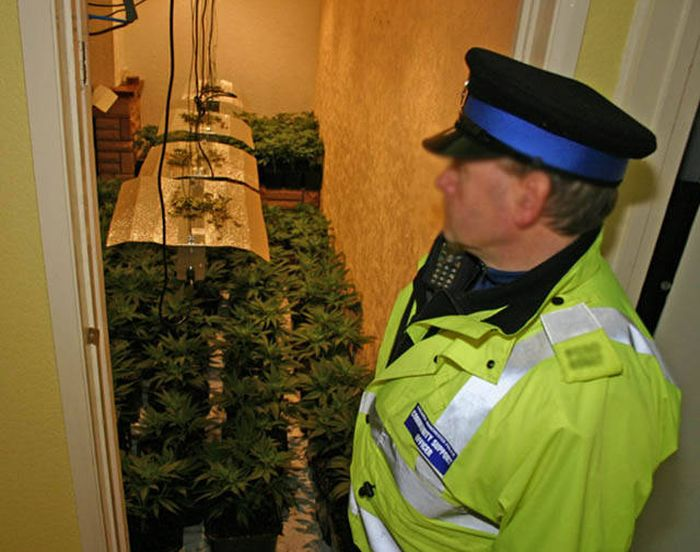 Police Find A Huge Marijuana Stash After Neighbors Report An Unusual Smell