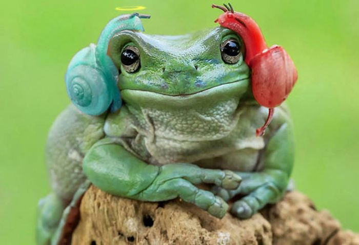 Frog That Looks Like Princess Leia Gets The Photoshop Battle Treatment