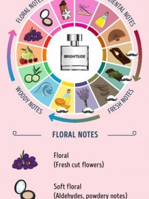 A Guide To Perfume For Aspiring Perfume Connoisseurs