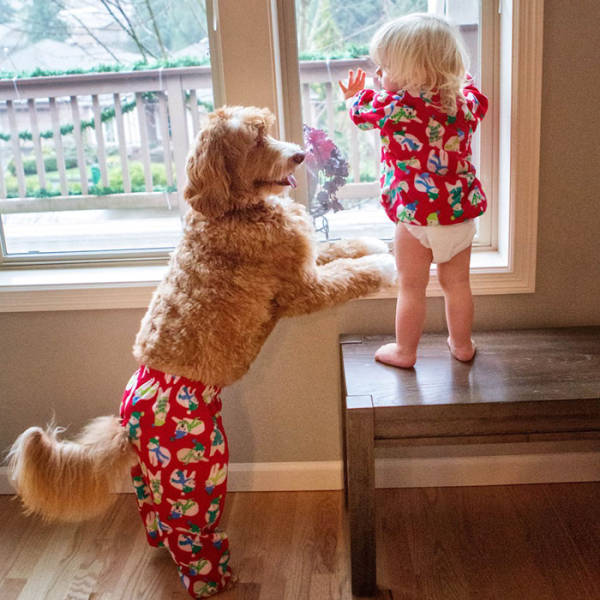 This Boy And His Adorable Labradoodle Do Everything Together