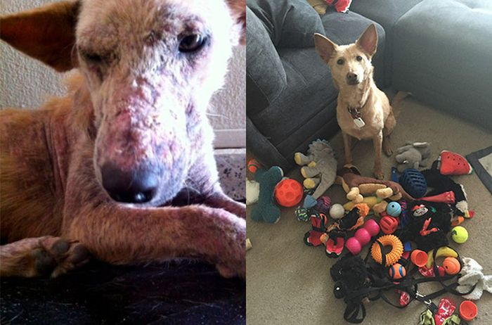 Before And After Animal Photos Show The Difference A Loving Family Makes