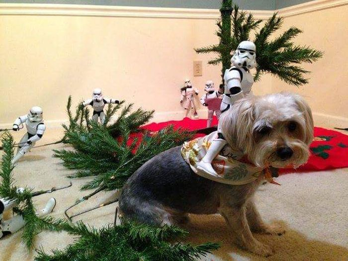 Stormtroopers Set Up The Tree For Christmas