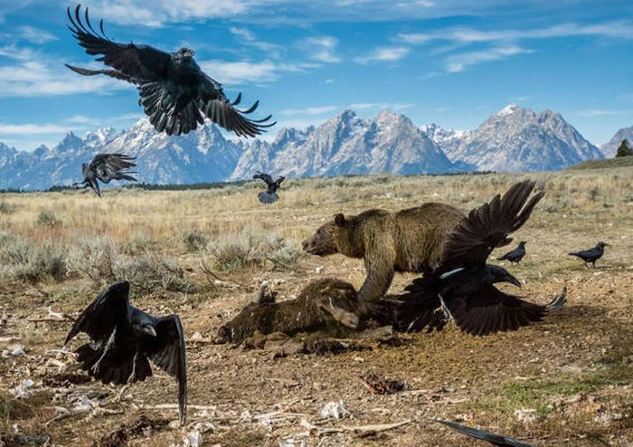 The Best National Geographic Photos Of 2016, part 2016