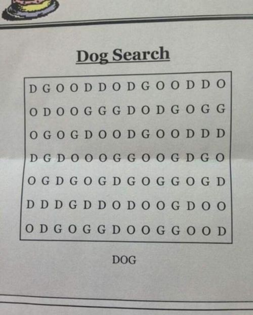 Clever Dog Puzzle Has People Scratching Their Heads