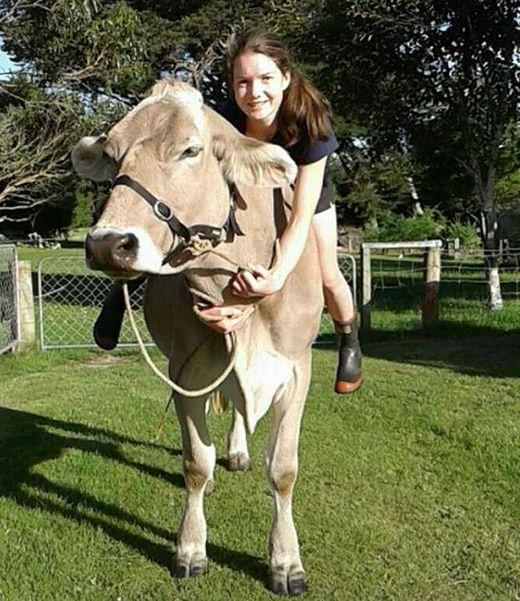 Girl Gets A Cow For Her Birthday After Asking For A Pony