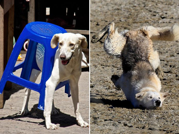 Funny Dog Fails That Will Make You Feel Bad For Laughing
