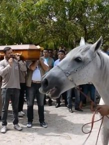 Heartbreaking Photos Show Sereno The Horse Crying At His Owner's Funeral