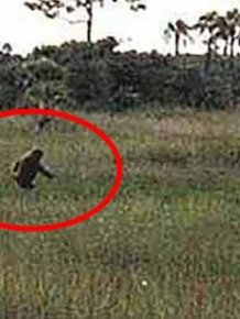 Strange Creatures That People Actually Believe In
