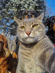 It Looks Like Animals Have Caught The Selfie Virus Too