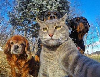 It Looks Like Animals Have Caught The Selfie Virus Too