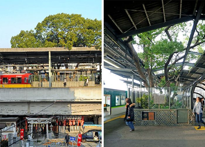 This Train Station In Japan Was Built Around A 700 Year Old Tree