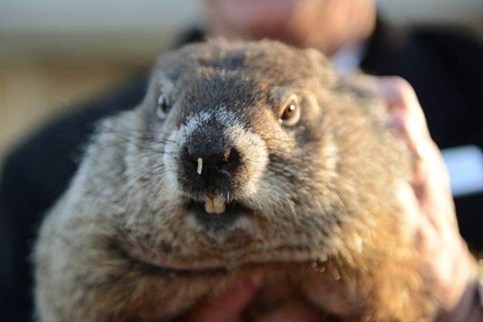America's Chief Meteorologist Appears On Groundhog's Day